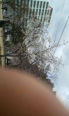 桜咲いてます◇◇